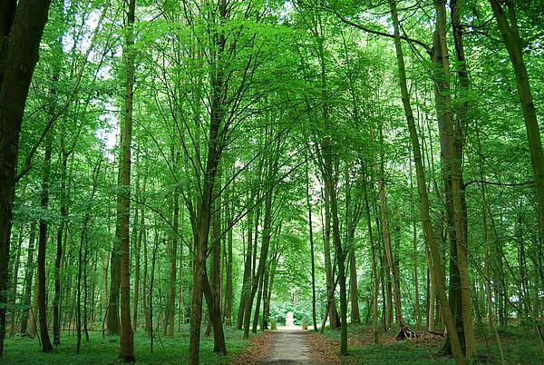 Sehr grüner Streckenabschnitt auf der Tour 3 durch einen Wald