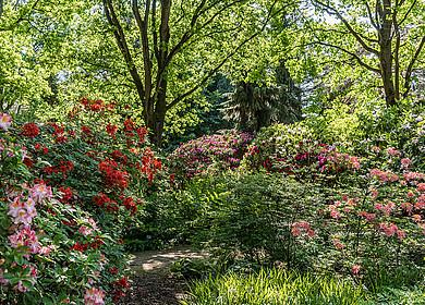 Rhododendronpark im Park der Gärten mit blühenden Pflanzen und Bäumen