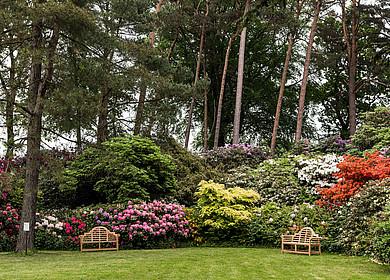Sitzbänke vor blühenden Rhododendren und Bäumen im Rhododendronpark Hobbie in Westerstede
